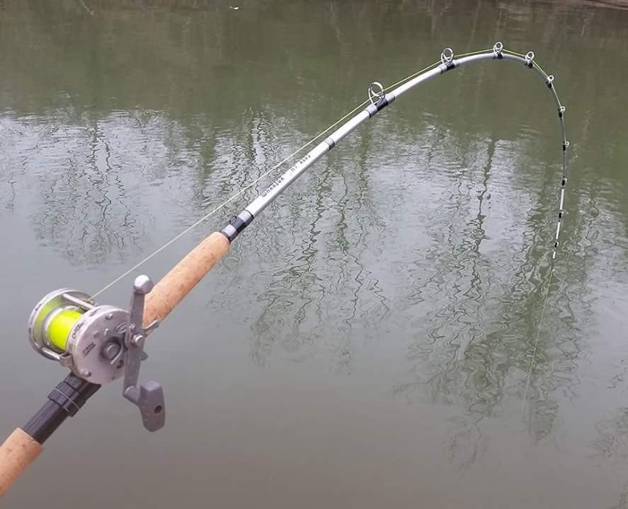 Warrior Cat Rods Review